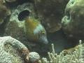 filefish1