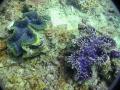 2 clams -