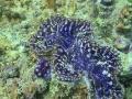 clam 8