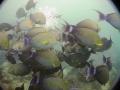 tang swarm
