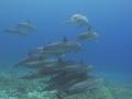 dolphin pod xy
